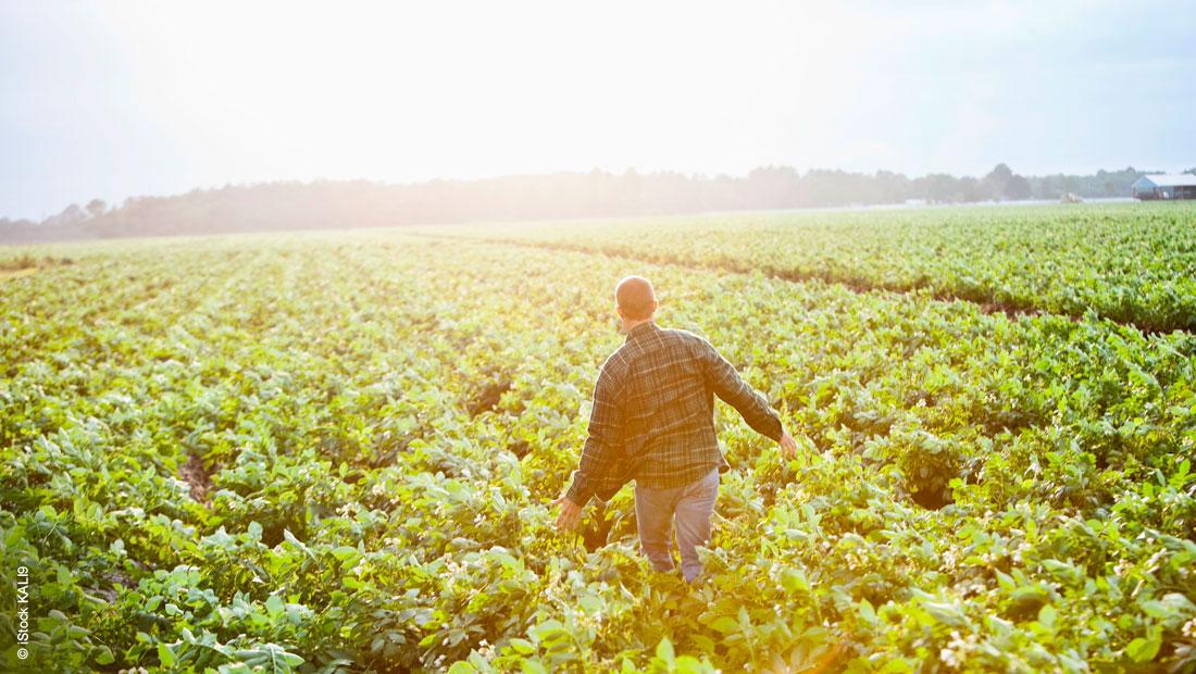 Vorteile von aromatischen Lösungsmitteln für die Agrarchemie