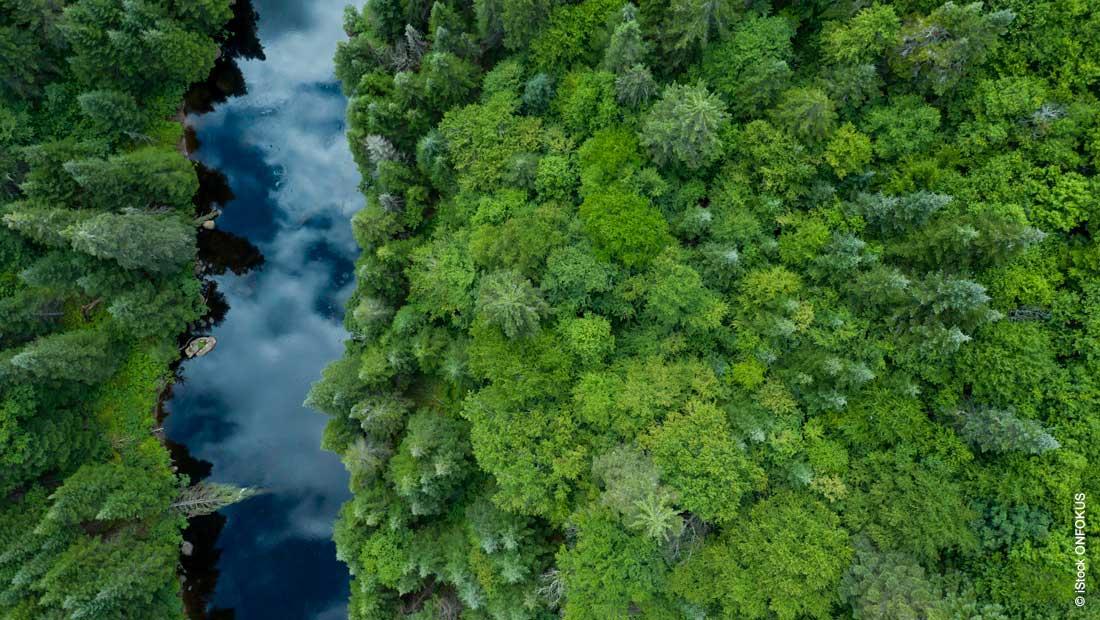 CO2-Ausstoß verringern: nachhaltige Lösungen bei Haltermann Carless